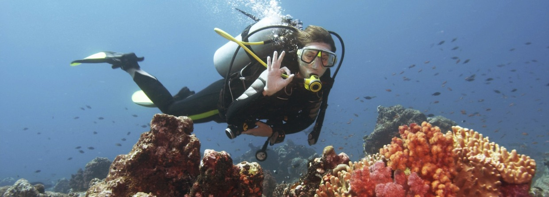 Duiker bij koraalrif